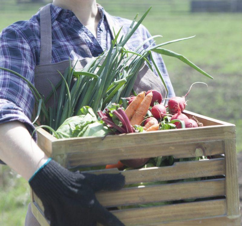 野菜を持つ女性の画像